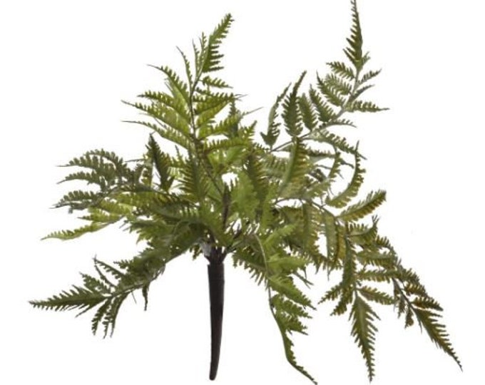 Fern Spray