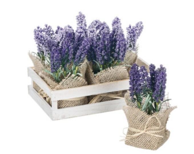 Short Burlap Wrapped Hyacinth