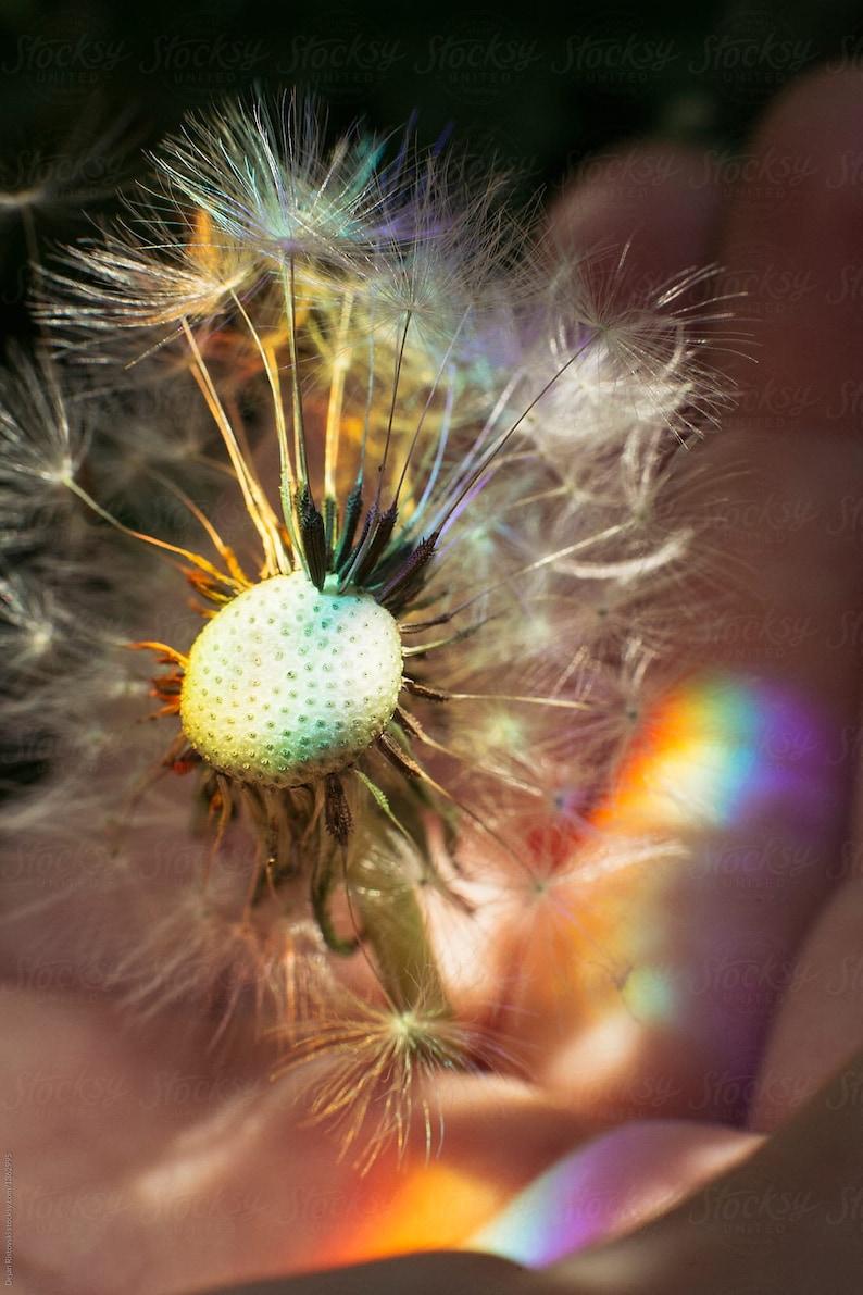 Flower Essence  Ascension Codes I: Personal Evolution image 0