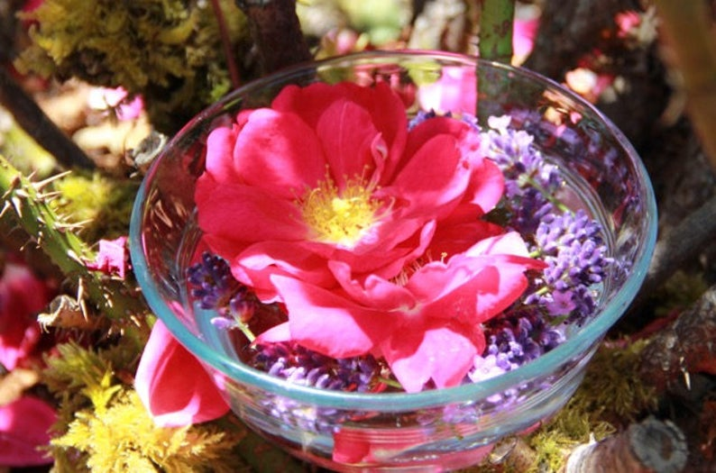Flower Essence  RoseLavender: Fierce Love image 0