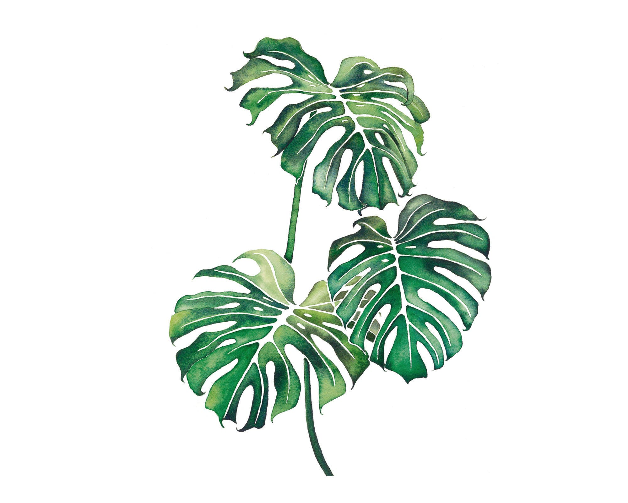 imprimer feuille de monstera monstera plante impression etsy. Black Bedroom Furniture Sets. Home Design Ideas