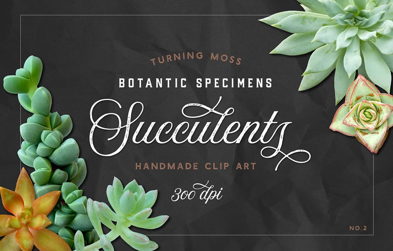 Succulent ClipArt  Digital Succulents  Cactus ClipArt  image 0
