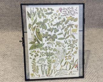 Vintage framed botanical drawing, vintage botanical flower illustrations, botanical prints, floral, in glass frame, Green
