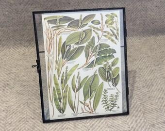 Vintage framed botanical drawing, vintage botanical flower illustrations, botanical prints, floral, in glass frame, Green leaves