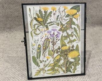 Vintage framed botanical drawing, vintage botanical flower illustrations, botanical prints, floral, in glass frame, yellow and green
