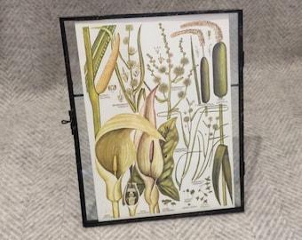 Vintage framed botanical drawing, vintage botanical flower illustrations, botanical prints, floral, in glass frame, Green leaves lillies