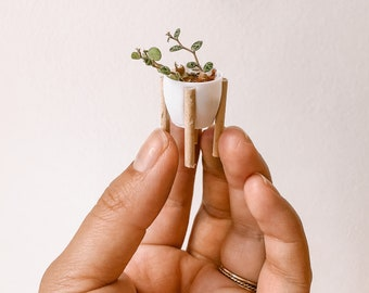 Teeny tiny pot with wood legs I 3D printed planter I multiple colors available