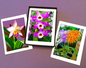 Boxed Set of 6 Orchid Photo Note Cards