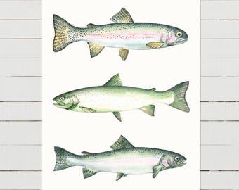 Two Rainbows & A Dolly, fish print, fish wall art, rainbow trout, fish illustration, lake watercolour, rustic,