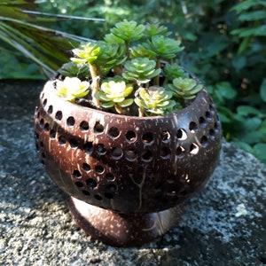 Coconut Shell Planter Pot//Plant Pot//Succulent//Succulent Pot//Tree Planter//Desk