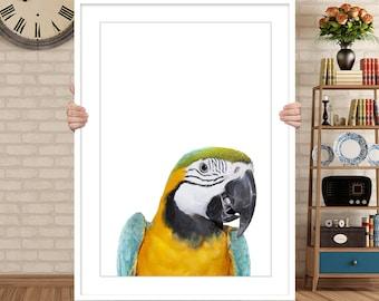 Parrot Print, Macaw Print, Parrot Wall Art, Bird Print, Parrot Photo, Tropical Decor, Parrot Printable, Parrot Poster, Tropical Bird Print