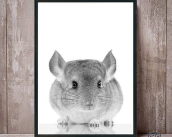 Chinchilla Print, Chinchilla Art, Chinchilla Wall Art, Chinchilla Poster, Chinchilla Black White, Chinchilla Printable, Chinchilla Decor