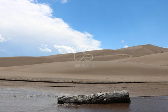 Log in the Water - Sand Dunes National Park