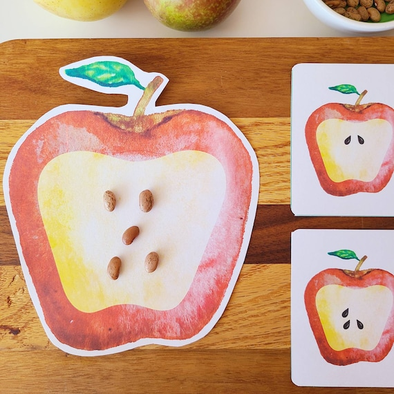 Apple Seed Counting Cards PRINTABLE  Montessori Math