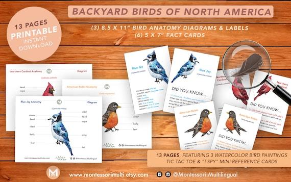Backyard Birds of North America  Homeschool Montessori