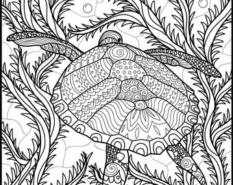 Printable Coloring Page Turtle Coloring Page Adult Etsy