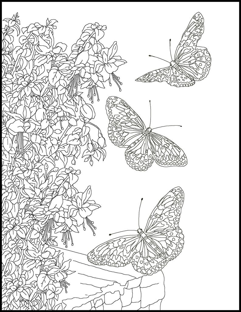 Butterfly adult coloring page printable coloring page for etsy