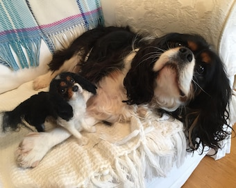 King Charles Spaniel/OOAK Pet Memorial Sculpture/Felted Animal/Pet Ornament/Medium Pet Portrait/Pet Gift/Cavalier Spaniel/Pet Loss Gift