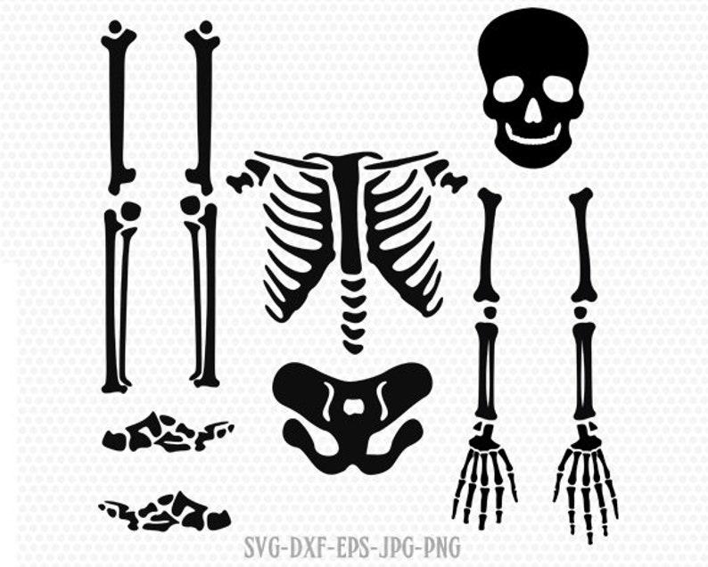 Halloween Skeleton.Skeleton Parts Kit Svg Halloween Skeleton Svg Skeleton Svg Halloween Svg Cricut Files Svg Jpg Png Dxf Silhouette Cameo