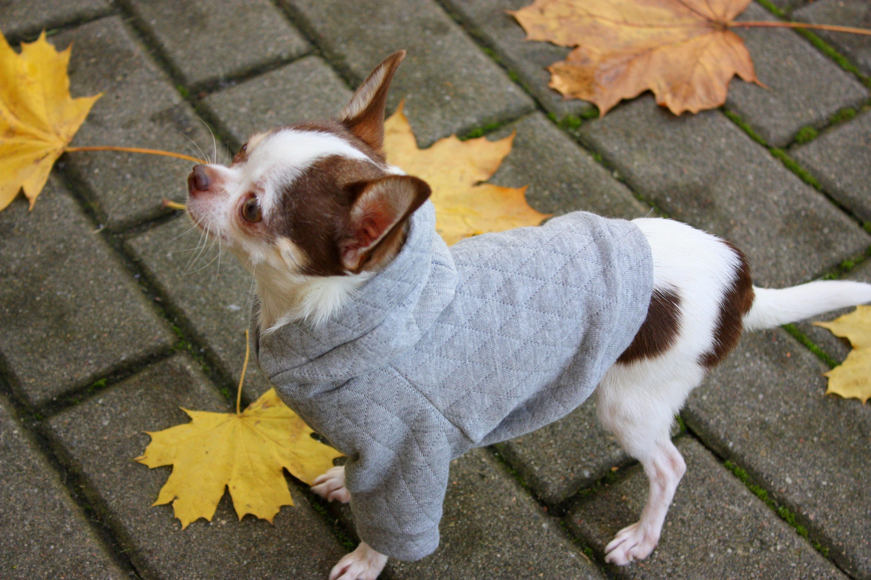 Grauer Pullover grau Hund Hoodie Hund Kostüm Pullover Dackel