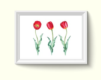 Red Tulip Flower Watercolor Painting Poster Art Print P366