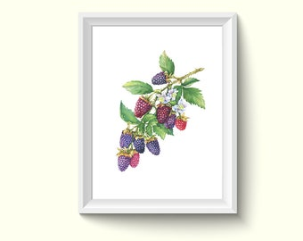 Berry Branch Watercolor Painting Poster Art Print P488