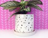 Black Spots Ceramic Planter-large