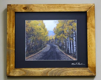 Aspen leaves near Steamboat Springs, Colorado