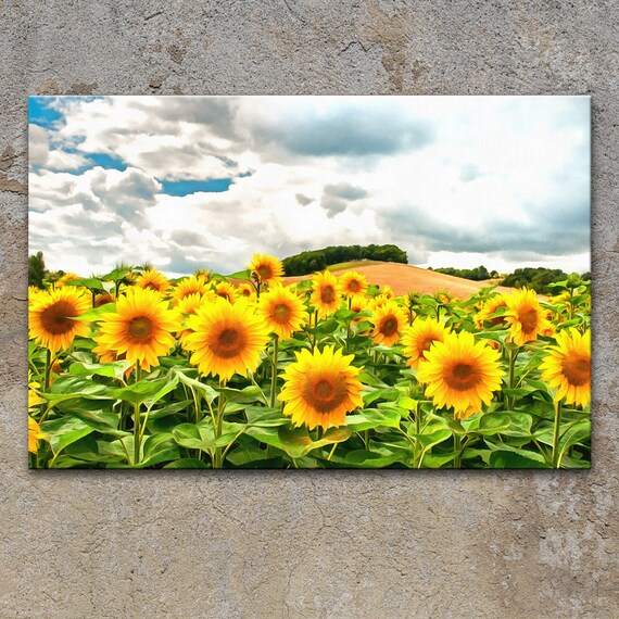 SUNFLOWERS FIELD CANVAS WALL ART PICTURES PRINTS DECOR LARGER SIZES AVAILABLE