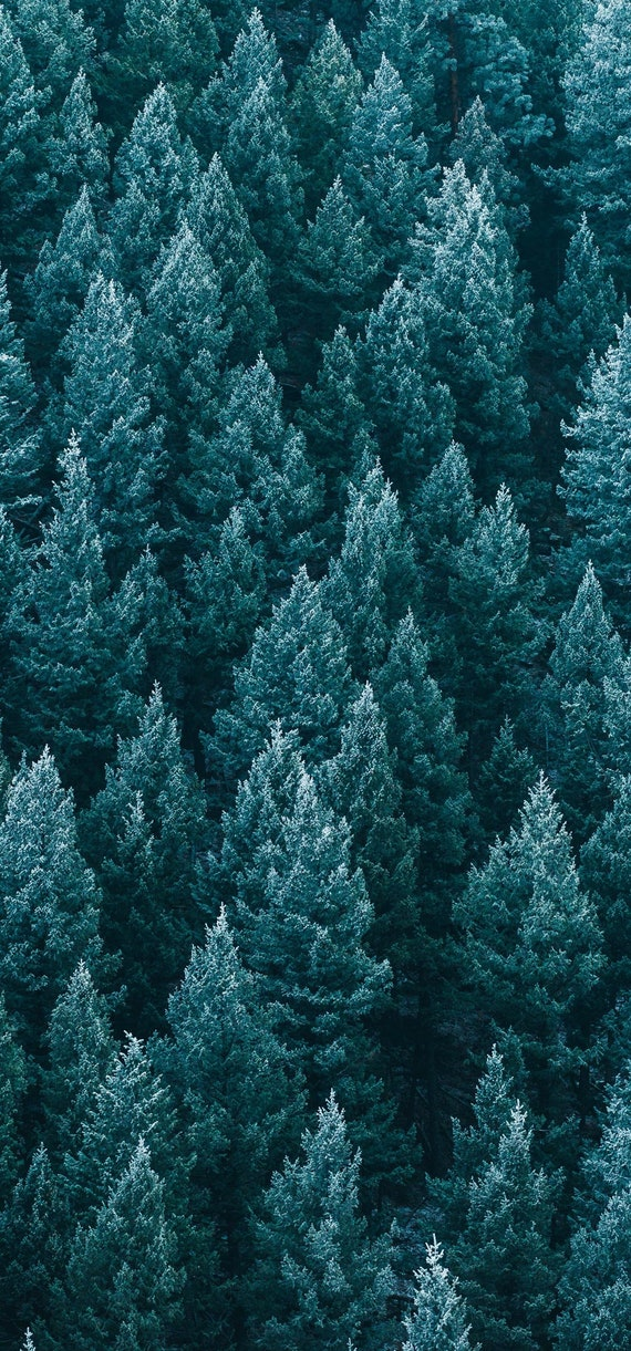 Conifer Tree Abstract Wallpaper Iphone X Iphone Xs Instant Download