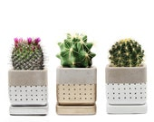 Decorate Your Own Home Garden With the stylish Meraki Set, Cacti Succulents Wee Pots