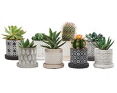 Cacti Succulents Wee Pots, Set of Two - Decorate Your Own Mini Garden With the Stylish Set of Planters.