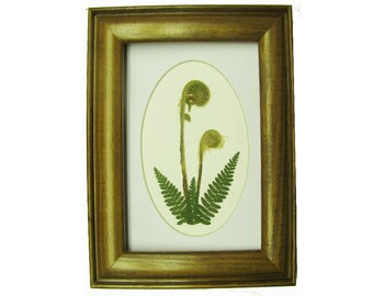 Pressed Flower Picture, Fiddleheads, Botanical Art, Nature Art, Fern Picture, Floral Art, Fiddlehead Fern
