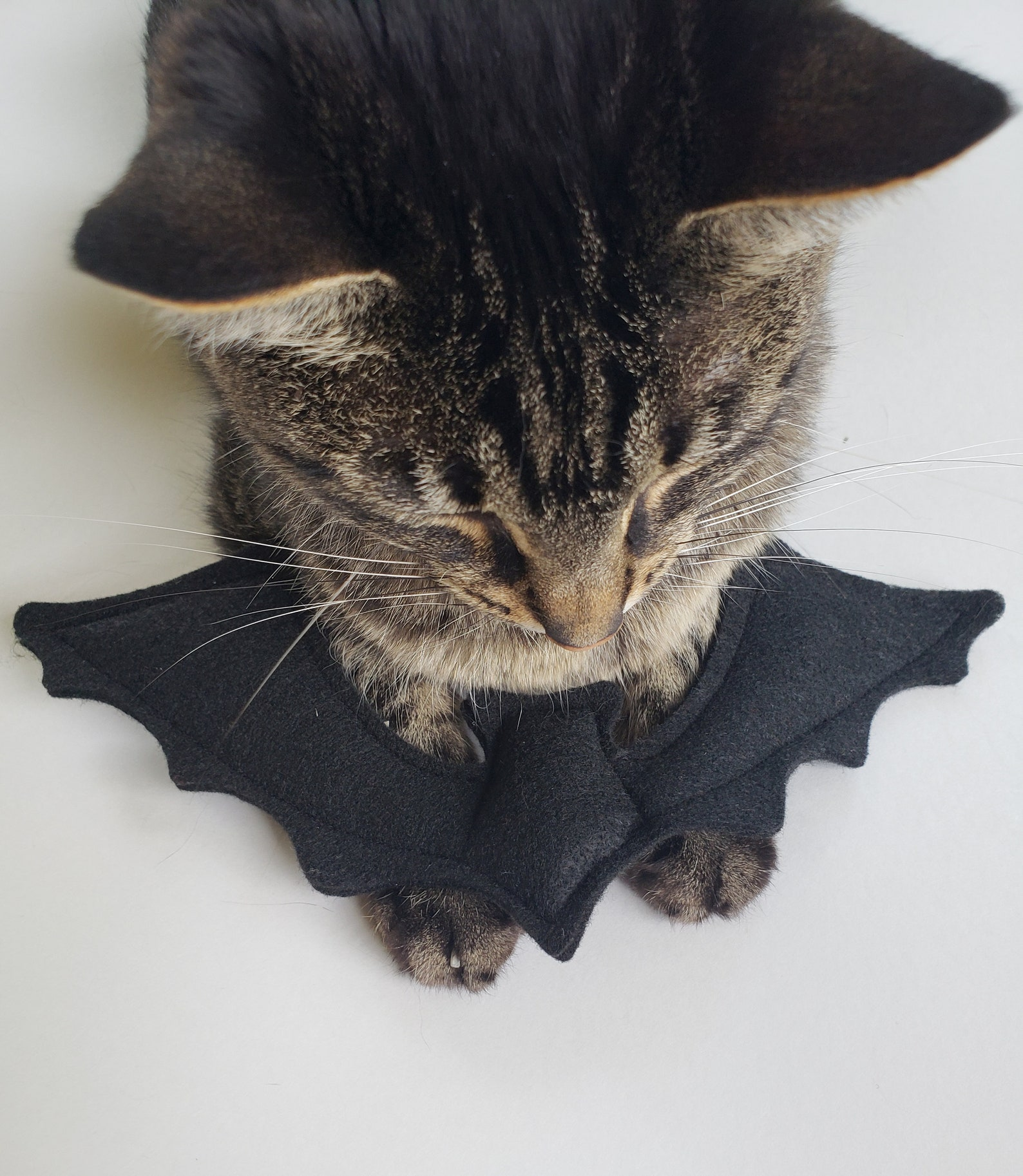 Organic Catnip Bat Cat Toy
