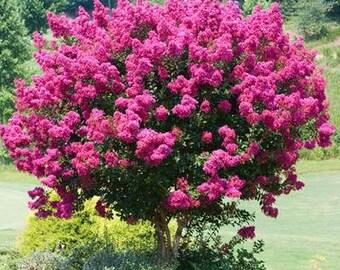 Ornamental trees | Etsy