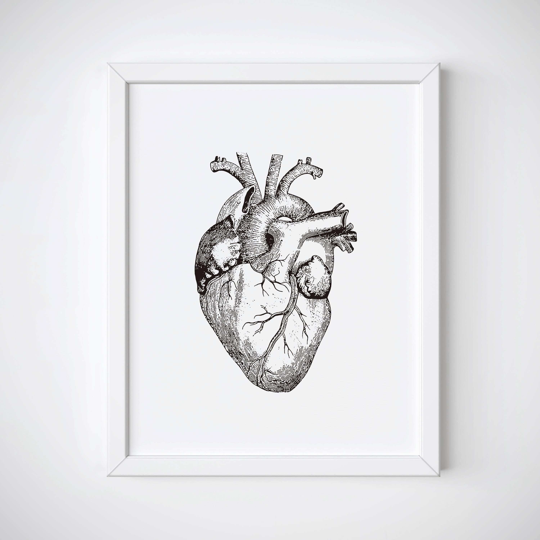 Anatomical Heart Print Human Heart Anatomy Print Heart Etsy