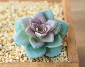 DIY Plants for Home Decor DR546 Artificial Succulents Faux Succulents Miniature garden Imitation Succulents