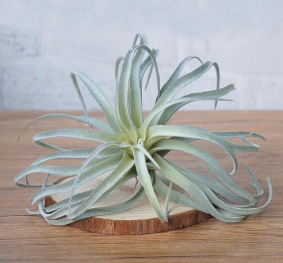 Faux Succulents Imitation Succulents Miniature garden Artificial Succulents DIY Plants for Home Decor DR163