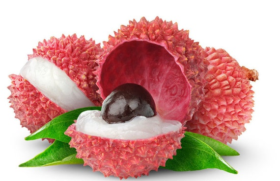 Lychee Seed Images