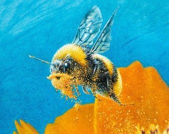 Bearded Bee Prints - Watercolor Bee Wall Art