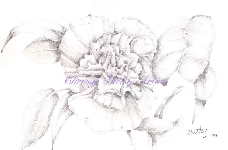 Grey Scale carnation flower digital colouring page image 0