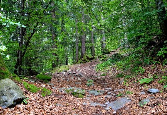Drzewa Tapety Naklejki ścienne Lasu Leśne Tapety Leśne Naklejki ścienne Natura Wall Mural Las ściany Przyrody I Skórki Trzymać