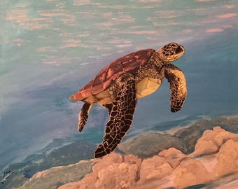 Sea turtle/ Ocean life