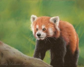 """Original 30cm x 40cm Pastel Painting of Red Panda """"Seeking"""""""