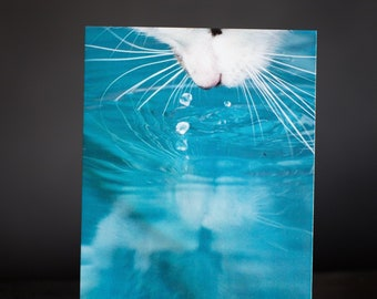 Set of 2 Postcards: REFLECTION -  cat -  greeting card - birthday - water - drops - summer