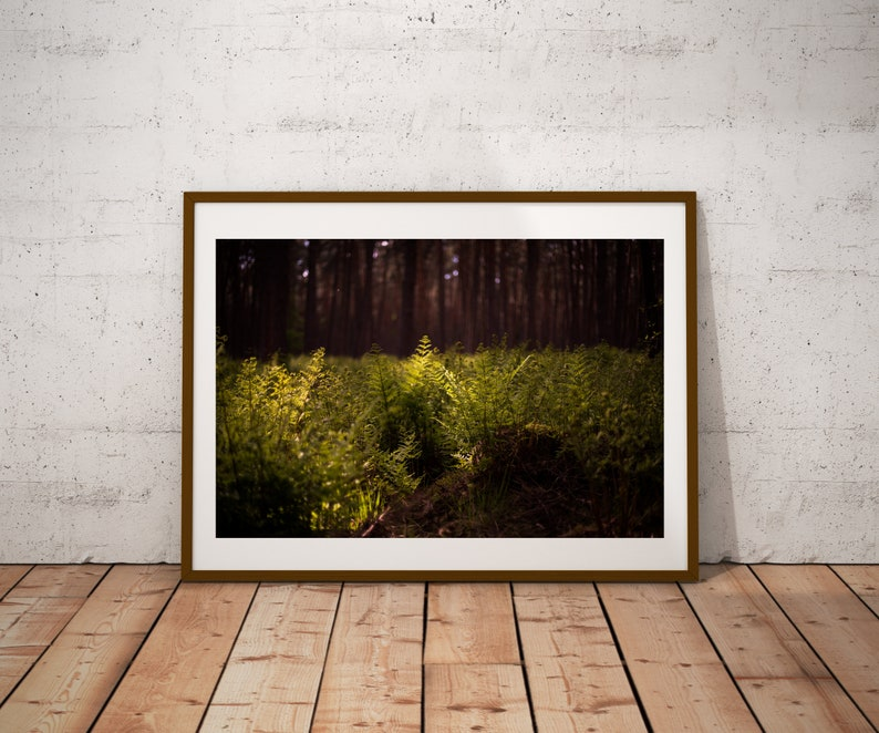 Poster: Forest Dark Photography Print Fern Green Woods Peace image 0
