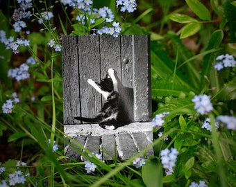 Postcard: YOGA CAT --- cat -  rescue - shelter - animal protection - yoga - stretching - photography - black and white -banasana - half moon