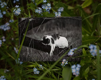 Set of 2 Postcards: EDDIE IV --- cat -  rescue - shelter - animal protection - sleeping - photography - black and white
