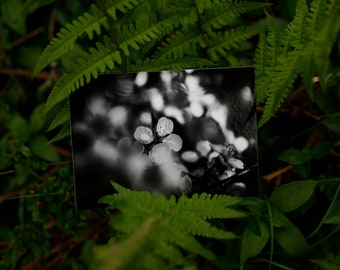 Postcard: WHITE BLOSSOMS------ greeting card - nature - snailmail - tree - flowers - nature - black and white
