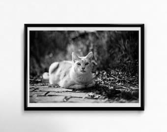 Fine Art Poster Print: Joshi #1 ---- cat poster - photography - cat portrait - black and white - pet - animal